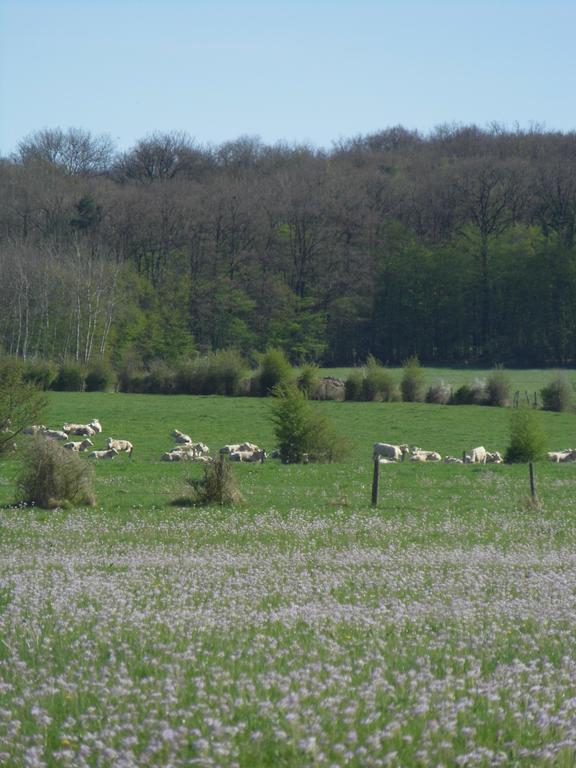 Maec haute marne - Chambre agriculture haute saone ...